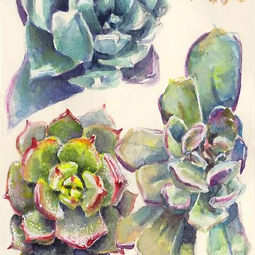 Summer Succulents by EricaBottger