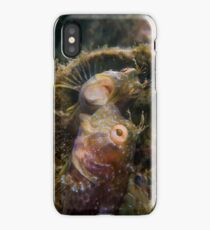 A Seaweed Blenny Fight iPhone Case/Skin