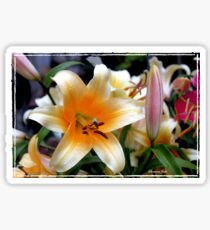 Tequila Sunrise Lily with Raindrops Sticker