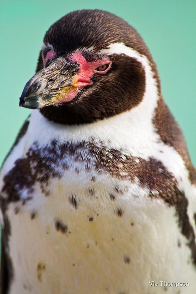 Humboldt Penguin by vivsworld