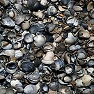 Shells by Bluesrose