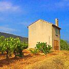 Little House In The Vineyard by jean-louis bouzou
