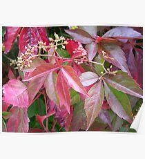 Coloured Foliage Poster