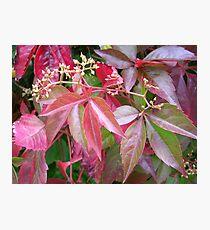 Coloured Foliage Photographic Print
