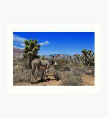 Burro at Spring Mountain State Park, Nevada Art Print