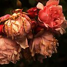 Withered roses by Agnes McGuinness