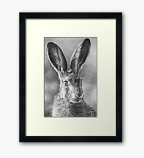 Hare Today, Gone Tomorrow Framed Print