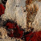 Hot Rock by Debbie Oppermann