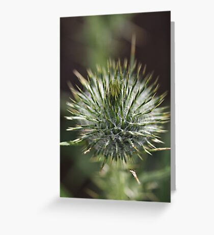 Round Green Thistle Bud Greeting Card