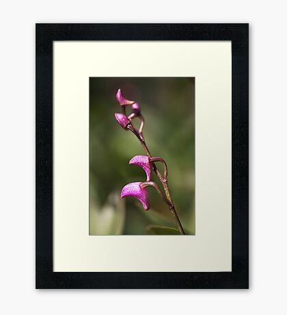 Small Orchid Framed Print