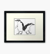 Little Blue Penguins - smallest penguin in the world! Framed Print
