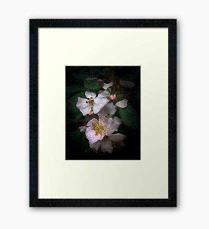 The Wild Roses Framed Print