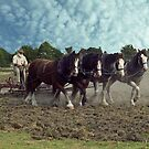 Working Horses in Korumburra by Bev Pascoe