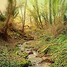 Along the Stream. by Dave Harnetty