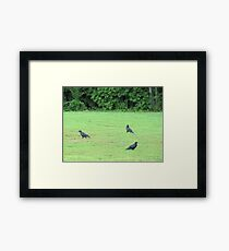 Dagnabbit!! I think The Early Bird got here first! Framed Print