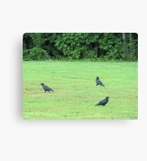 Dagnabbit!! I think The Early Bird got here first! Canvas Print