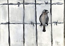 Bird (On A Barbed) Wire by RobynLee
