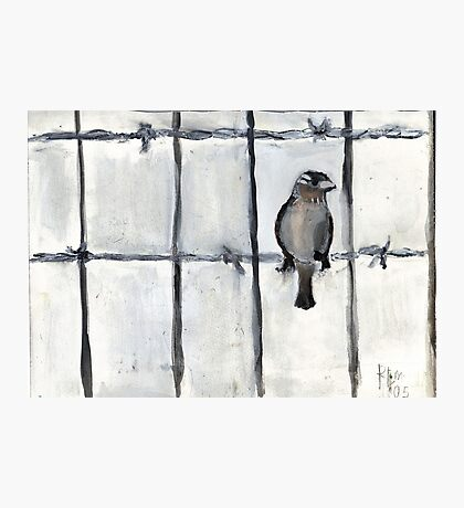 Bird (On A Barbed) Wire Photographic Print