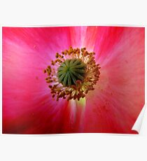 Heart of a Red Poppy Poster