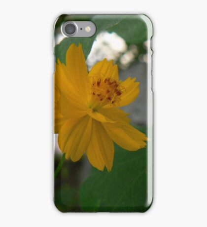 as sunny... iPhone Case/Skin