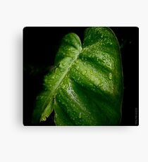 Green Leaf Canvas Print