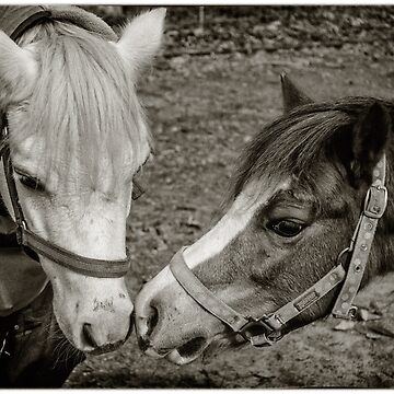 Two's Company by AmyesPhotograph