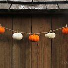 String of Pumpkins by James & Laura Kranefeld