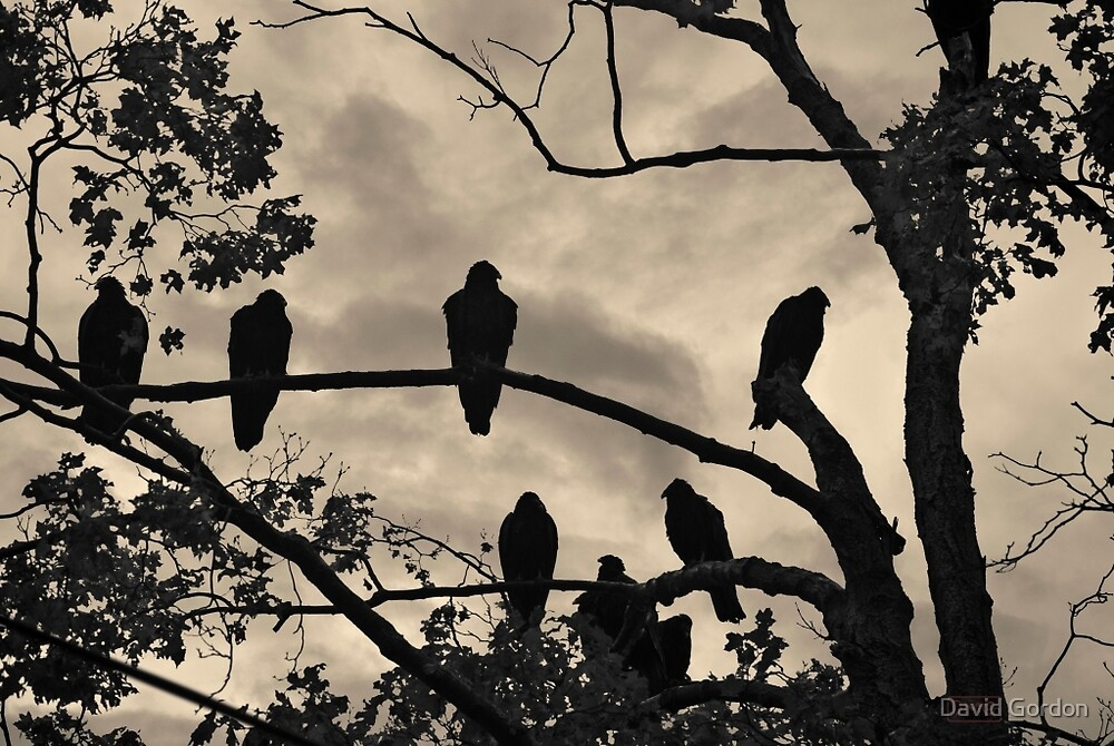 Vultures And Cloudy Sky by David Gordon