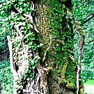 Ivy covered tree, Colebrooke, Fermanagn, Northern Ireland by Shulie1