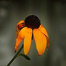 First Signs of Fall by Bine