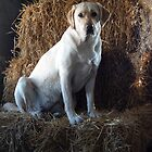 Doggie in the Straw by nastruck