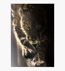 Pat the Cat -Wild Jaguar Photographic Print