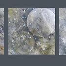 Siler Oak n Irish Stone x 3  by evon ski