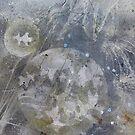 Silver Oak #1 by evon ski