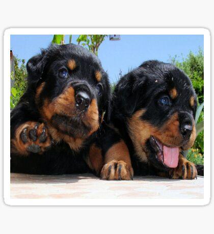 Two Rottweiler Puppies, High Five Sticker