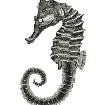 Seahorse by jenofuto