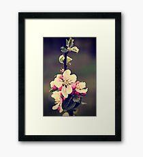 Apple flowers Framed Print