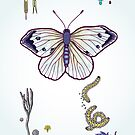 cabbage butterfly by smalldrawing
