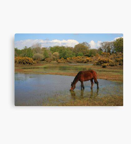Setley Pond Canvas Print