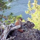 Chuckie on the Rocks by Marita Sutherlin