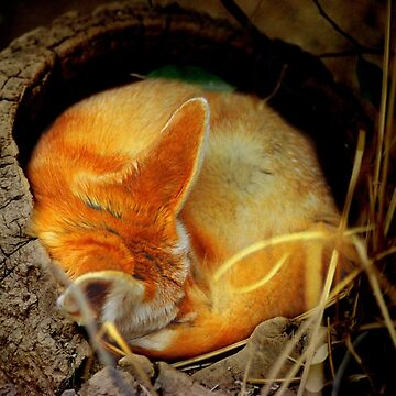 Fennec Fox Napping by dangerouslyclos