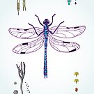 happy dragonfly by smalldrawing