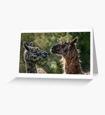 Sweet Llamas Greeting Card