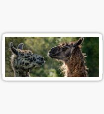 Sweet Llamas Sticker