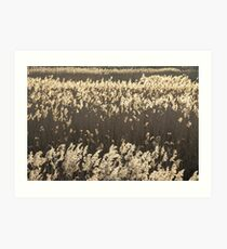 Norfolk Reeds Art Print
