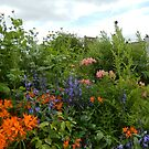 mixed border @ Harmony House by Babz Runcie