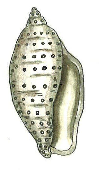 «Caracola Gris» de laramaktub