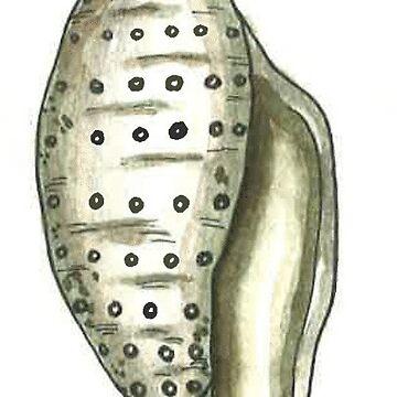 Caracola Gris de laramaktub