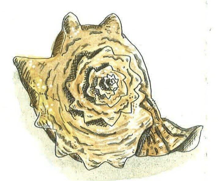 «Intrincate Shell» de laramaktub