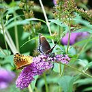Swallowtail and Fritillary Butterfly Sharing Flower by LinnyRett